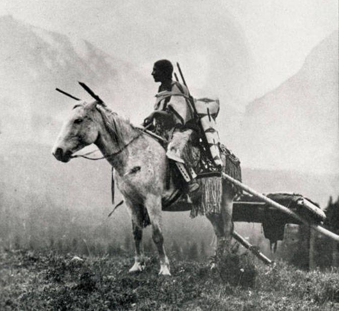 Montana Native Plants: 101 Best Indian Travois Images On Pinterest