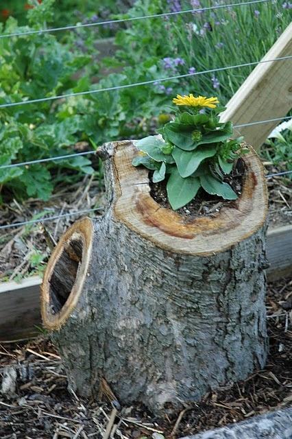 hollowed tree stump plantersGardens Ideas, Tree Stumps, Hollow Trees, Trees Planters, Stumps Planters, Gardens Planters, Flower Pots, Gardens Outdoor, Trees Stumps
