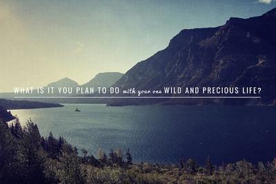 ...wild & precious life...