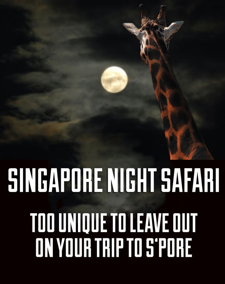 Don't leave Singapore without checking out the night safari!