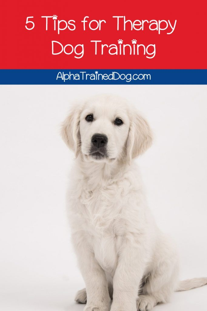 Service Dog Etiquette Do You Know How To Act Around A Service Dog