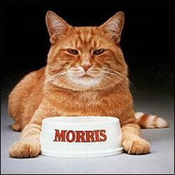 """*The first Morris died in 1978 and was  replaced by more cats who played """"Morris."""" All cats to play Morris have been rescues, either coming from an animal shelter or a cat rescue."""