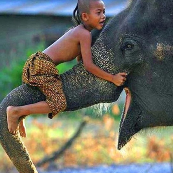 http://fashionpin1.blogspot.com - Friends!: Elephants, Animals, Pet, Children, Things, Kids, Smile, Photo, Friend
