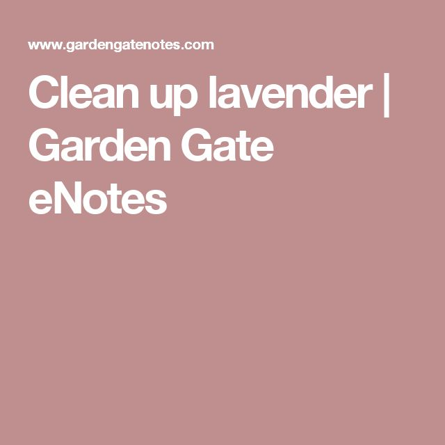 Clean up lavender | Garden Gate eNotes