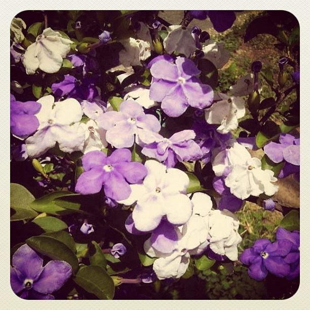 Flowers from Medellin - #flowers #instagood #iphonesia #photooftheday #instamood #iphoneonly #ipodonly #instacolombia #instamedellin #followme #likemyposts #megusta  #doubletap #jj #popularpage #instamood #bestoftheday #picoftheday #jj_forum #igerscolombia #igersmedellin - @lilianamoreno_- #webstagram