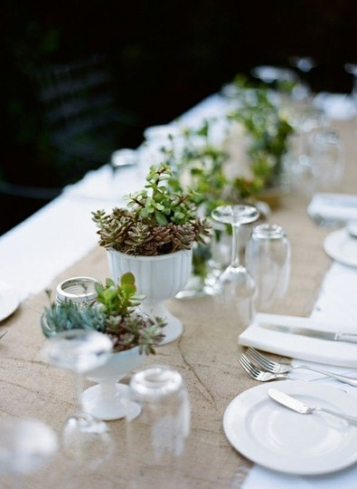 succulents in egg cups.