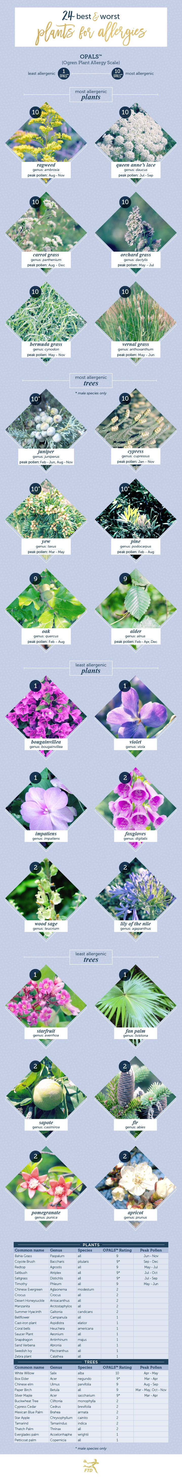 Blue apron allergies - 24 Best And Worst Plants For Allergies Check Out At Www Organic4greenlivings Com