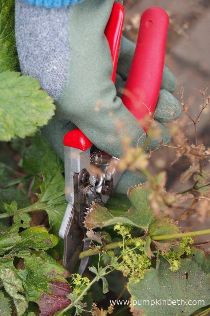 These Felco Model No. 12 Compact Deluxe Secateurs would make a very special gift at Christmas, or at any time of year.