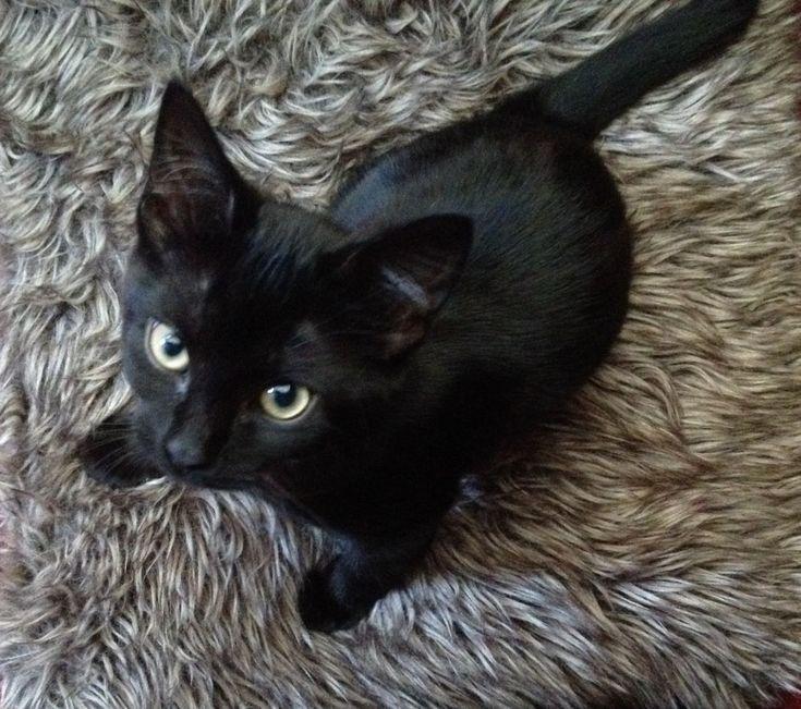 10 zwarte kittens - Hart voor Dieren