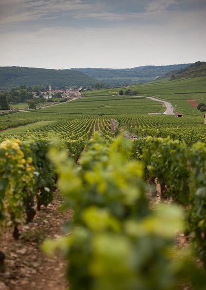 Villages of Burgundy