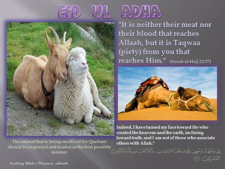 EID UL ADHA DUAS