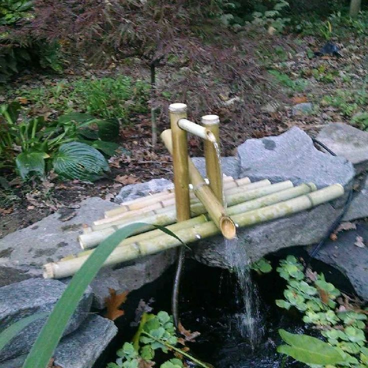 17 best images about landscaping on pinterest gardens for Bamboo water garden