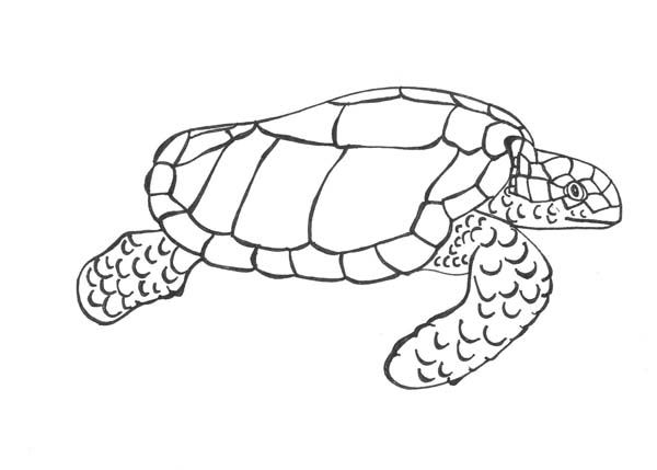 Sea Turtle Sea Turtle Dive Charters Free Coloring Page Free