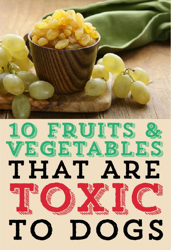 Here are 10 fruits and vegetables that are TOXIC to dogs!