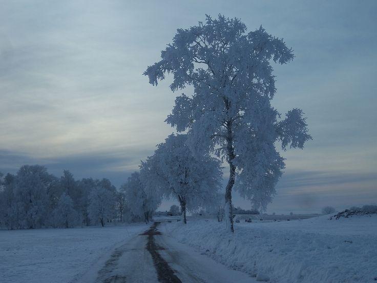 Arbol congelado 3
