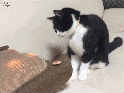"4gifs: ""Mesmerized cat ""Tap the link to check out great cat products we have for your little feline fri"