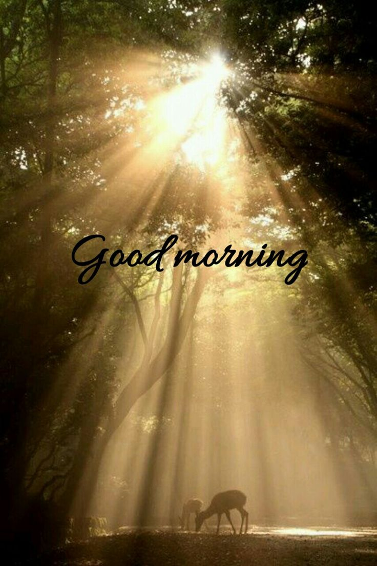 Good morning beautiful!!! Hope you slept well!!! I can't sleep... ugh. Hope you're having a fantastic morning!!!!