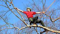 Onciconci: Tree Climbing, Salire sugli alberi è un vero e pro...