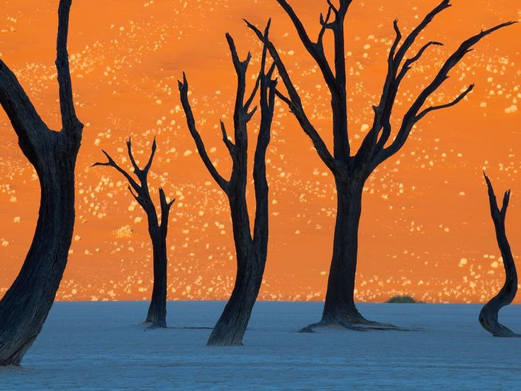 Not a painting – a photograph by Frans Lanting of the camel thorn trees of Namib-Naukluft Park.
