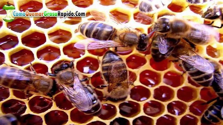 Miel de abeja sus propiedades y Beneficios de la Miel de Abeja en Ayunas  http://ift.tt/1SEqotn  Quieres Recibir más Videos? SUSCRIBETE A MI CANAL =========== OTROS VIDEOS SUGERIDOS ============= La canela sirve para bajar de peso - Propiedades medicinales de la canela: http://www.youtube.com/watch?v=yU_QvC5qVYE Linaza para bajar de peso - preparación y contraindicaciones de la linaza para adelgazar: http://www.youtube.com/watch?v=bym9bq1dRlM Propiedades de la papaya para adelgazar - Como…