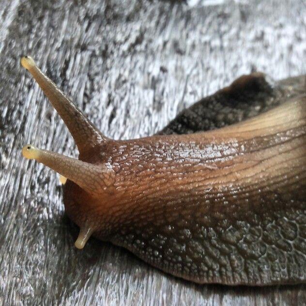 Snail on garden bench