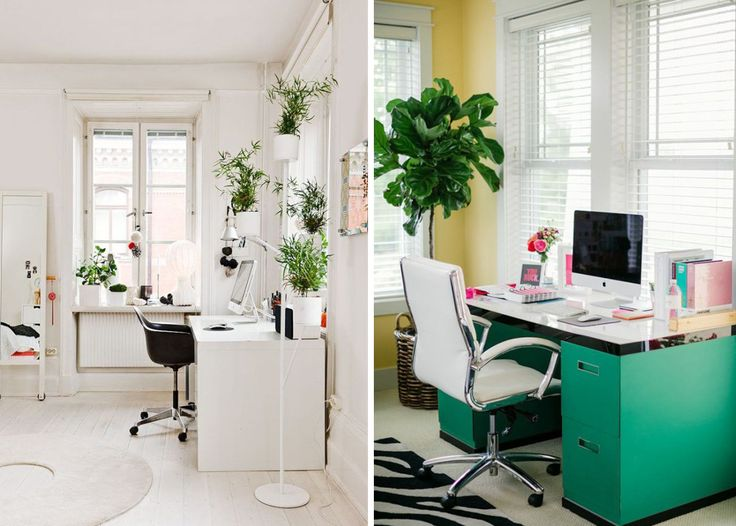 17 best images about dream home office library on pinterest offices colorful rugs and succulents - Cool office plants ...
