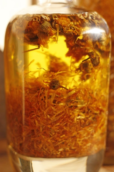 Making Marigold Oil.  Macerado de calendula