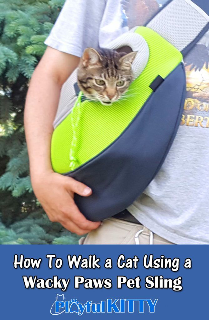 How do you walk your cat? My cats are enjoying their new pet slings from @WackyPaws ! #sponsored