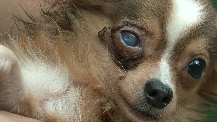 "SAY NO TO PUPPY MILLS! Please Sign & Share Widely In MORAL OUTRAGE!!!!!!!!!!  https://www.change.org/p/help-stop-puppy-mills-where-poor-defenseless-puppies-are-being-force-bred-and-unfairly-kept-in-small-cages#petition-letter  Puppy mills are large breeding ""factories"" where dogs live in deplorable conditions, often without necessary food, water, or veterinary care. This is a look inside."