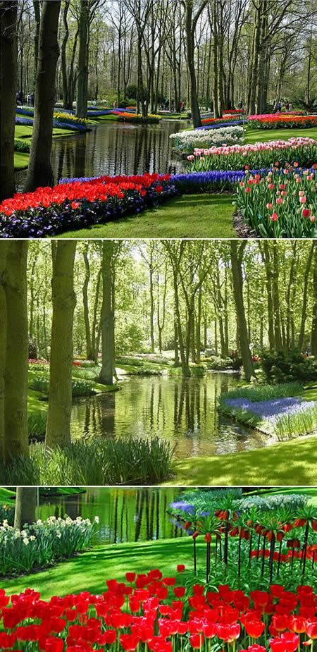 "This is the Keukenhof Gardens in the Netherlands, kinda ""In the Night Garden"" - ish."