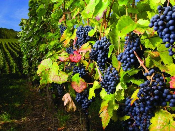 The Spring Okanagan Wine Festival