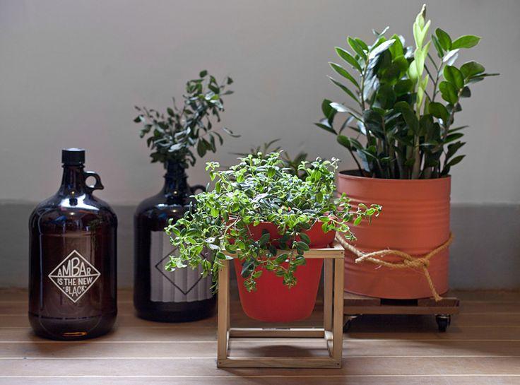 garrafas de vidro âmbar estampadas + suporte para vasos e cachepot - pomelo atelier