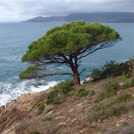 Développement Durable I @roseetmarius s'engage dans l'action de reboisement des calanques de Provence. Un arbre offert pour tout achat en ligne* sur www.roseetmarius.com  *achat à partir de 125euros