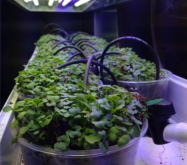 The 6 most tech-savvy restaurants in the world - Moto Restaurant molecular gastronomy and hydroponics in Chicago