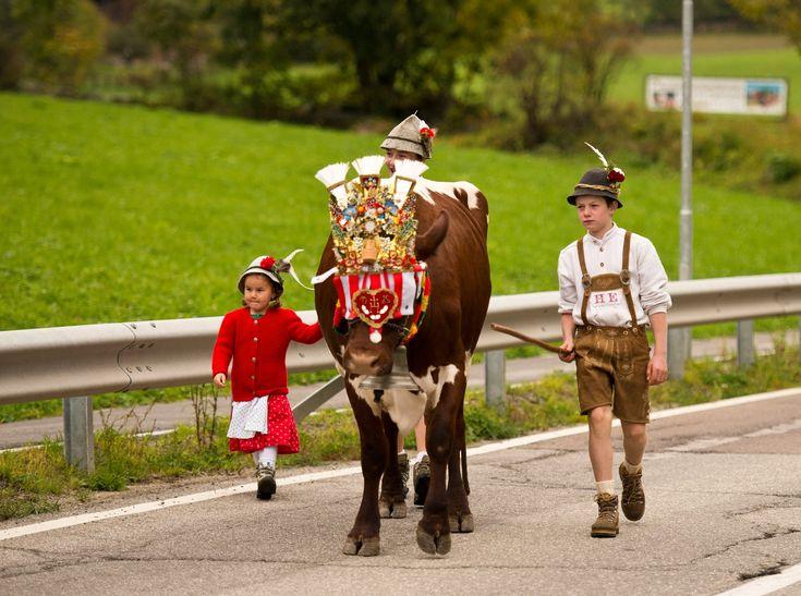 Almabtrieb beim Obermairhof in St. Jakob #Ahrntal #Suedtirol http://www.freizeit-suedtirol.com/