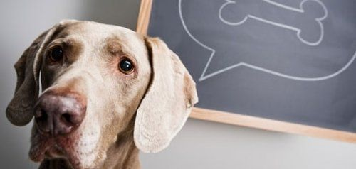 Compare pet insurance plans and prices using our handy chart!