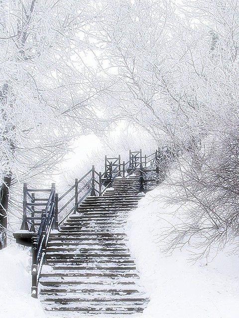 ♥Winter Scene, Stairs, Beautiful, Snow, Winter Wonderland, White Christmas, Staircas, Stairways