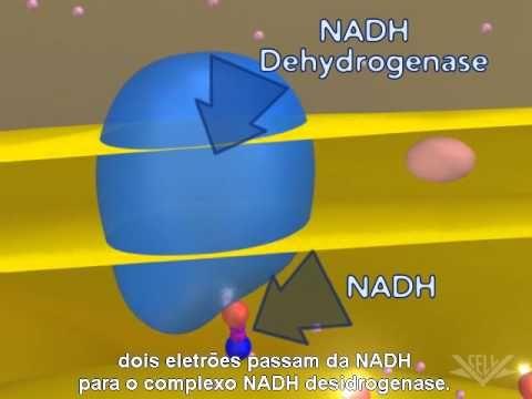 Respiração celular (Cadeia transportadora de eletrões)