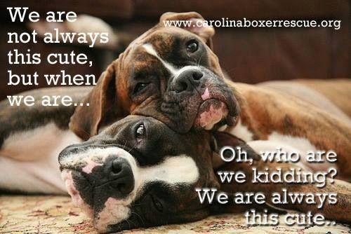 #boxers always adorable