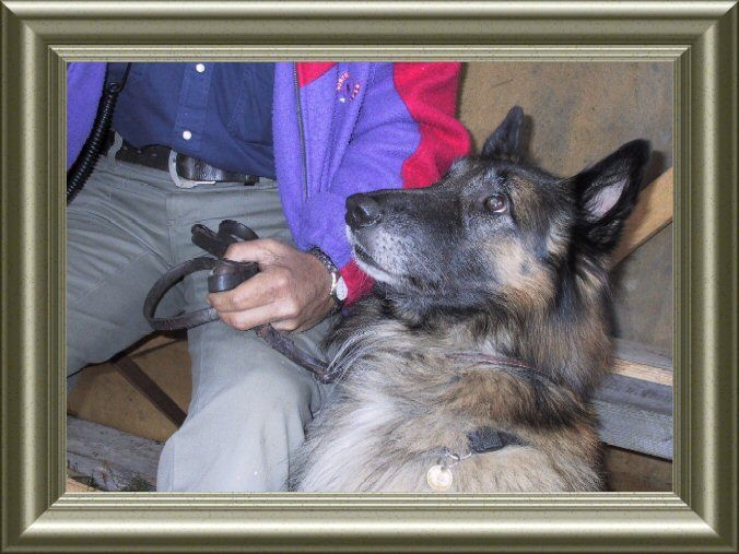 Holatoppen | LA5M Summer-cabin  JO59LL  is LA4FU With hees dog Nice photo