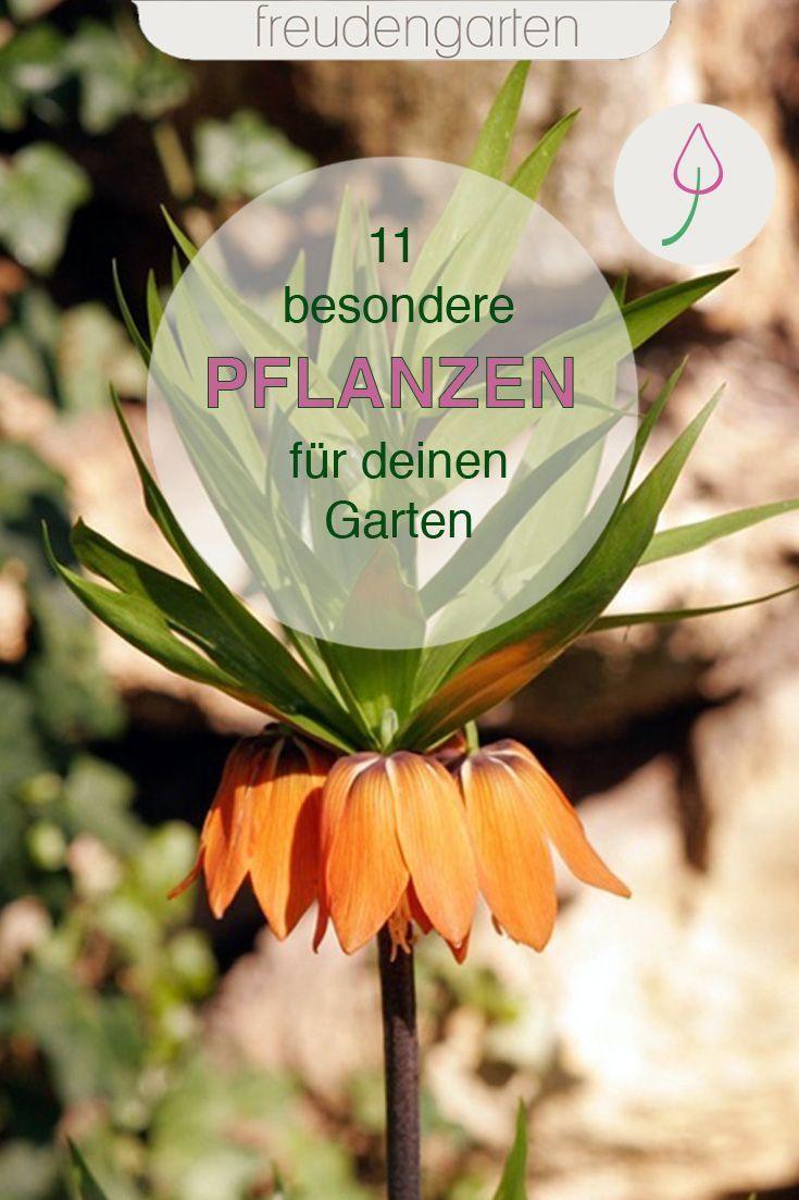 11 Aussergewohnliche Pflanzen Fur Den Garten In 2020 Garten Pflanzen Pflanzen Garten