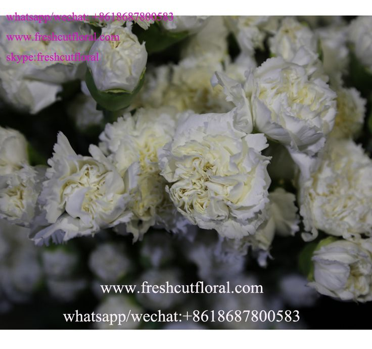 156 best +18687800583 freshcutfloral wholesale the preserved fresh ...