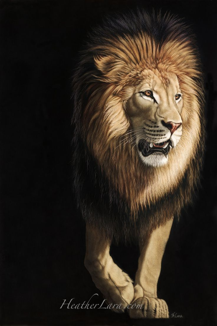 Izu 3 by Heatherzart.deviantart.com on @deviantART: Cats, Animal Art, Animal Paintings, Illustration, 6 Lion Painting By Heather Jpg, Lions, Art Scratchboard Animals Birds