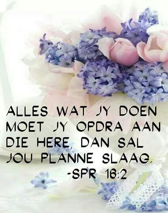 Spreuke 16:2