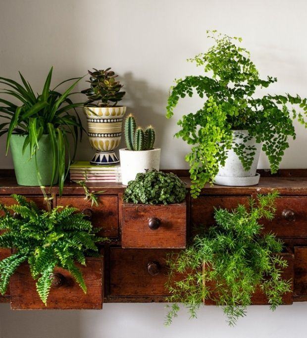 House Plants Breathe Life Into Interiors, While Cleaning The Air As They  Grow  The