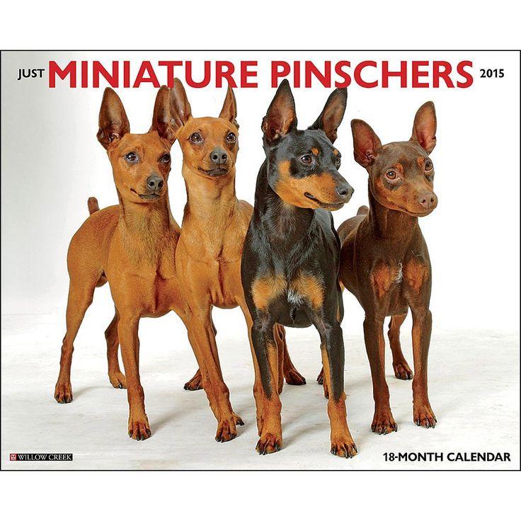 Miniature Pinscher 2015 Calendars ~ several styles featuring cute pics of min pin dogs and puppies ~ http://www.doggiechecks.com/calendars/Miniature-Pinscher.php