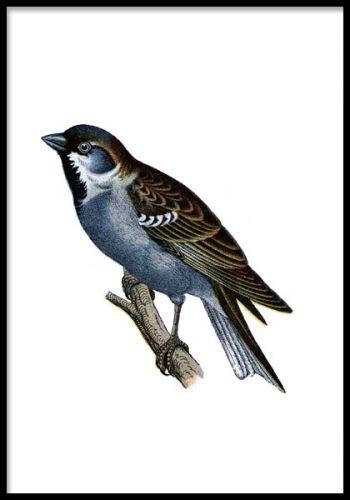 Affisch med liten blå fågel på gren. Liten poster med handritad illustration av blå fågel. Fin till vintage inredning men passar även andra stilar.