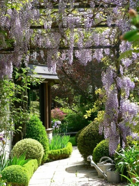 This is beautiful. I love the low-lying hedge used to edge the beds along with the different pruned shapes. The wisteria isn't bad either. ;)