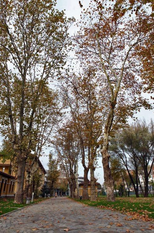 BİLGİ'de Sonbahar