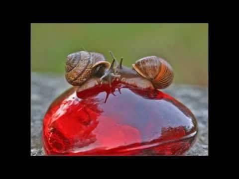 Всемирный день поцелуя (World Kiss Day или  World Kissing Day) — официал...